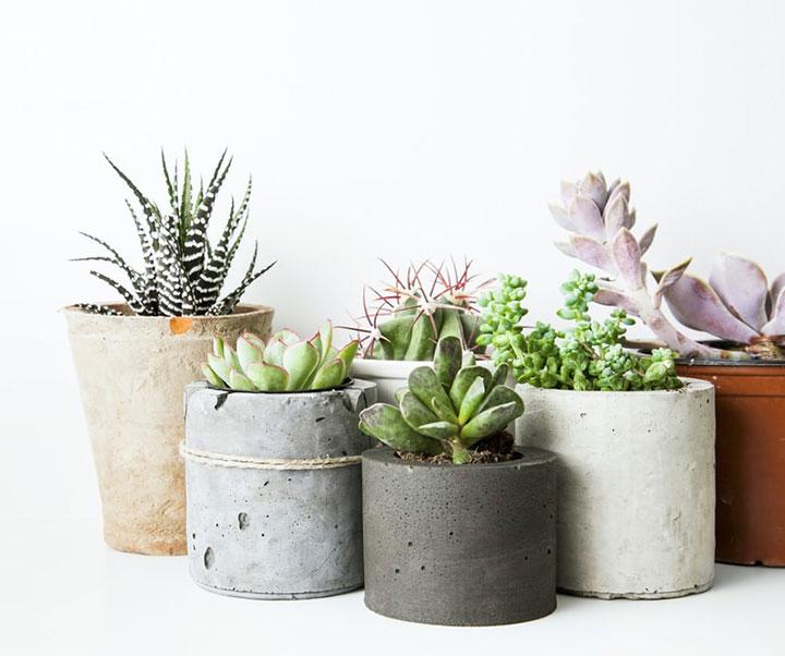 Decorar con cactus y plantas suculentas artificiales