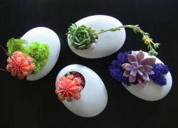 fotos-de-mini-jardines-05