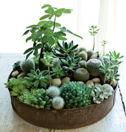 fotos-de-mini-jardines-13
