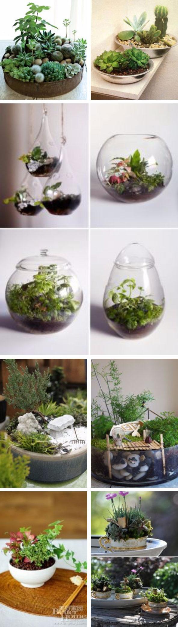 Mini Jardines de Suculentas originales