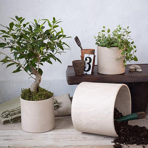 Trucos para decorar con plantas