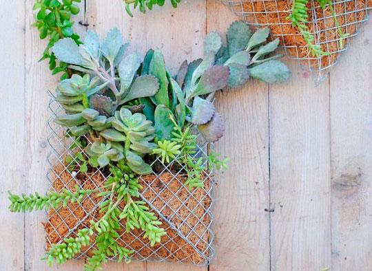 macetero de pared para plantas suculentas
