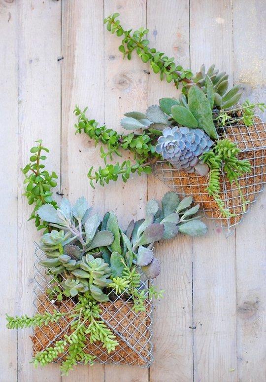 Macetero de suculentas formando un jardín vertical