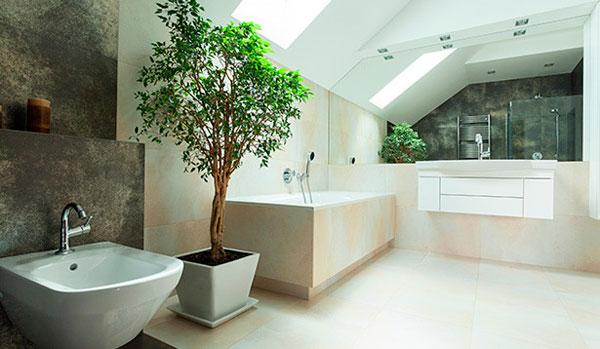 Baño con plantas naturales