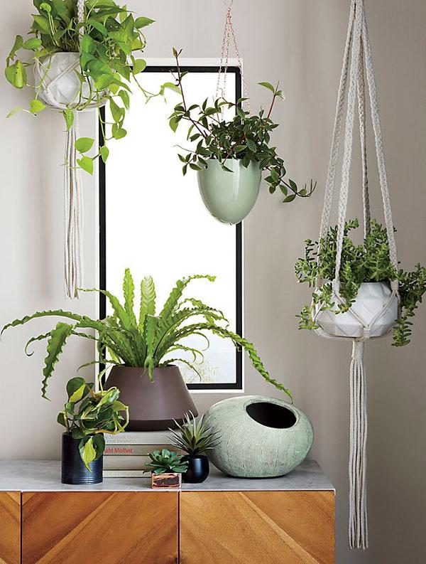 Las plantas son obligatorias en un ambiente Bohemio