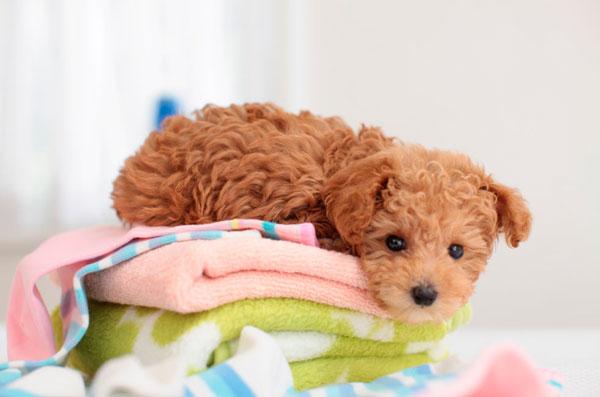 Perrito lavandería