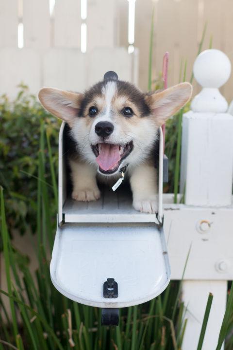 razas-perros-pequenos-10