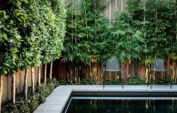 Plantas bambú para tapar a los vecinos