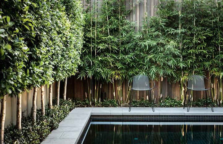 Ideas de plantas para tapar a los vecinos en el balcón y el jardín