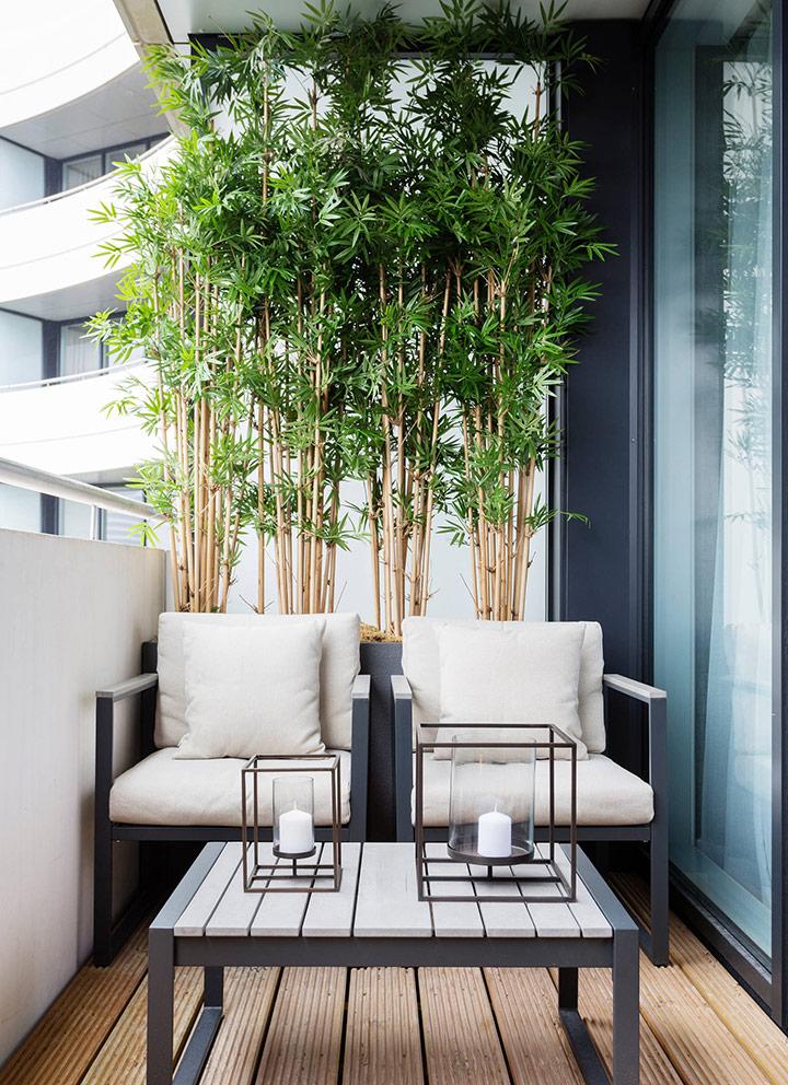 Plantas altas para privacidad en el balcón