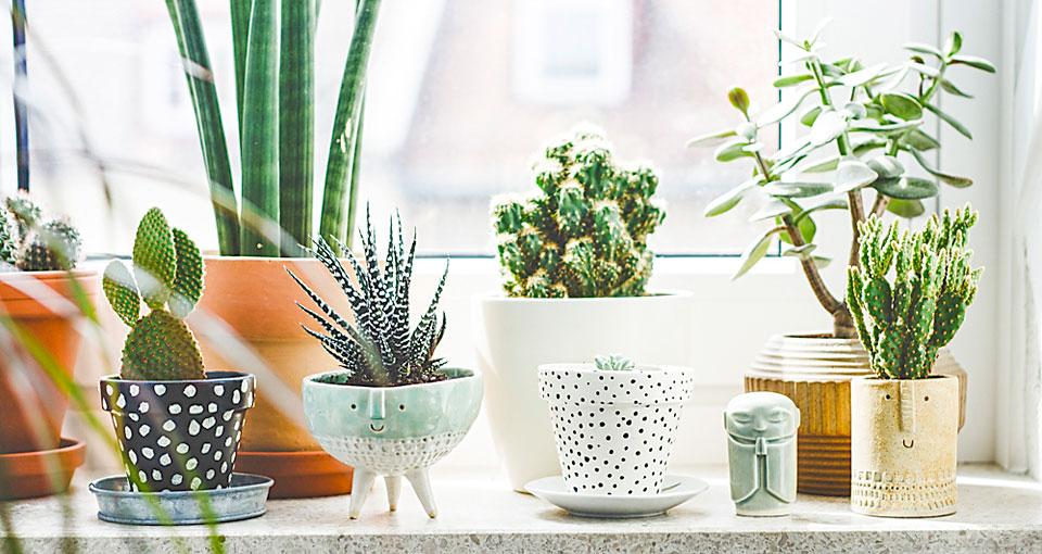 10 plantas purificadoras de aire contra las toxinas
