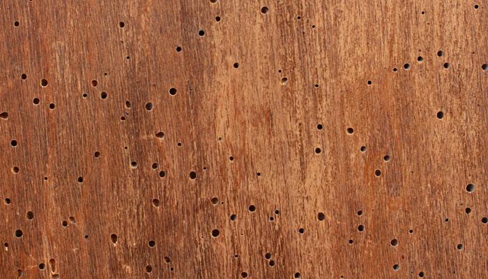 Carcoma y Polilla de la madera en los muebles