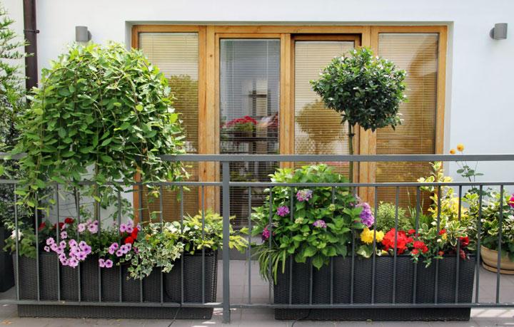 Cómo hacer jardines en balcones urbanos