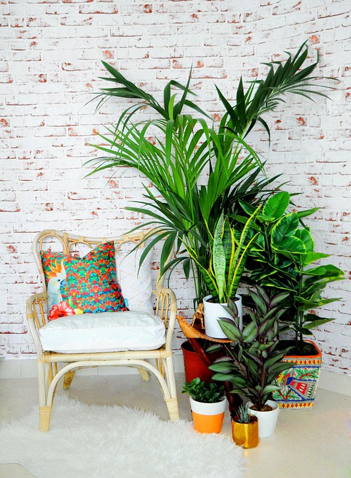 Disimula las humedades de la pared con plantas